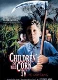 玉米田的小孩4