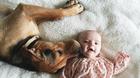 """镜头下:小兄妹与爱犬的午睡""""三人行"""""""