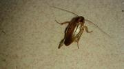 男子为救蟑螂袭击清洁员:它也是有生命的