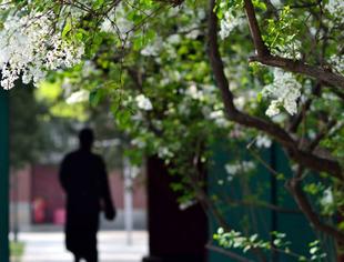 《档案》京城古刹 还有诗和丁香的法源寺