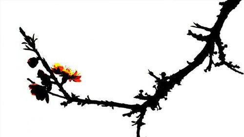 小尼话股:春风吹又生——强势股反抽战法