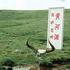 钱塘江冲浪(约525个相关视频)高清在线观看_360视频搜索 - 草根花农 - 得之淡然、失之泰然、顺其自然、争其必然