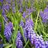 天宫庄园推出向日葵展品种多达80余种_宁波频道_凤凰网 - 草根花农 - 得之淡然、失之泰然、顺其自然、争其必然