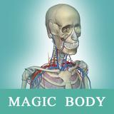 人体解剖学图谱:3D医学解剖软件,让你从任意角度观察人体的构造