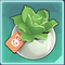 天竺葵盆栽.png