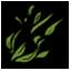 海藻.png