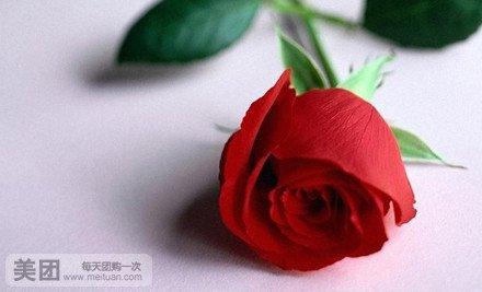 情人节60张单枝玫瑰图片