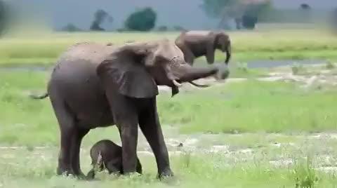 花样青春非洲篇预告:可爱四兄弟开启无内裤之旅