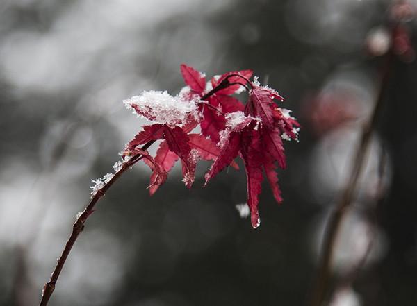 纷纷扬扬的雪花飘落在地上