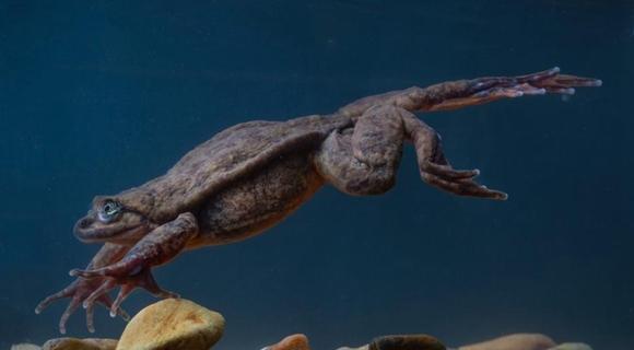 还活着就住进博物馆 最孤独水蛙等来另一半