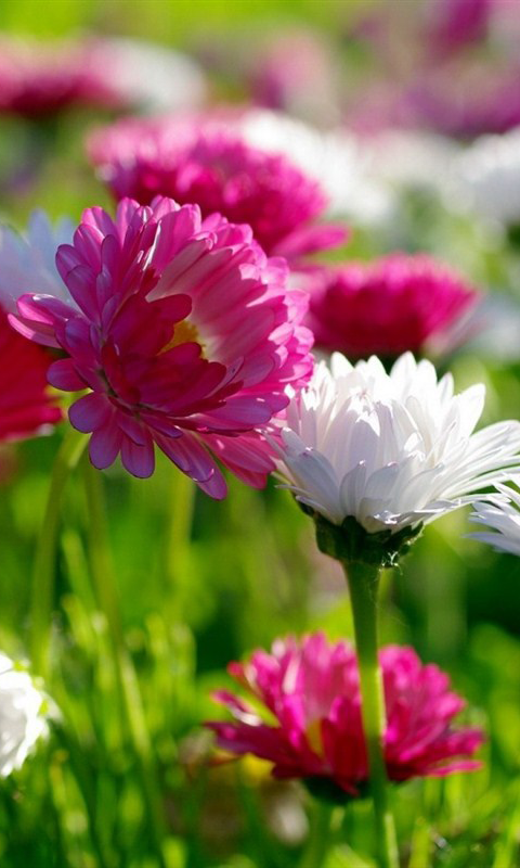 《 Flowers Live Wallpaper 》截图欣赏