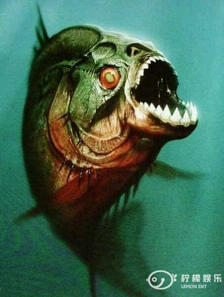 十大恐怖鱼类你知道食人鱼排第几位吗?