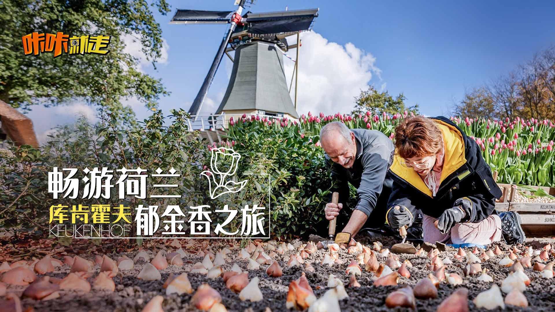 探秘郁金香王国荷兰,为你种下一片花海