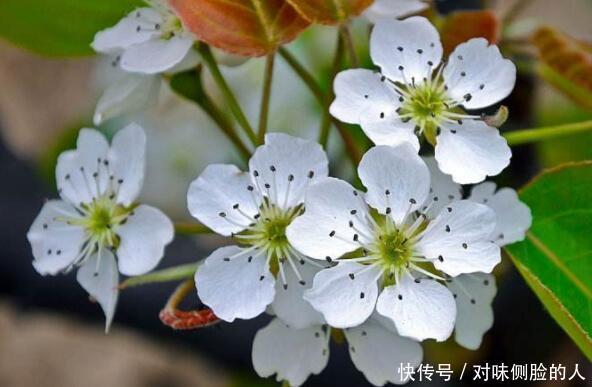 """喜欢养花选""""它""""花语永不分离,开花高雅洁白,居家首选"""
