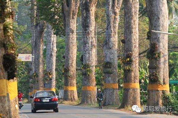 桦林橡胶厂街道风景