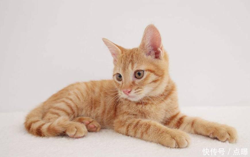 心理测试:最想抱哪个小猫咪回家,测一测你的爱情观是怎样的