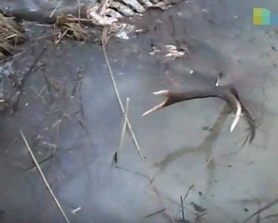 澳门威尼斯人娱乐场:小伙野外钓鱼发现奇怪干枝_捞过来仔细一看小伙惊喜万分