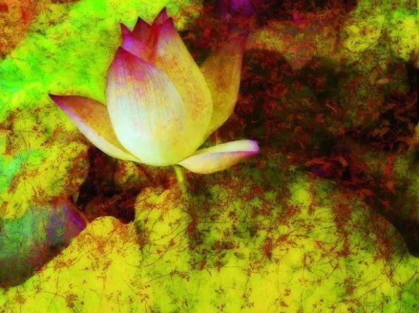 Rose【心好,一切都好(建议所有人都看一看!)】(5602) - Rose - Rose Yang的博客