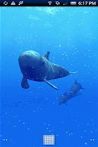 鲸鱼壁纸_360手机助手