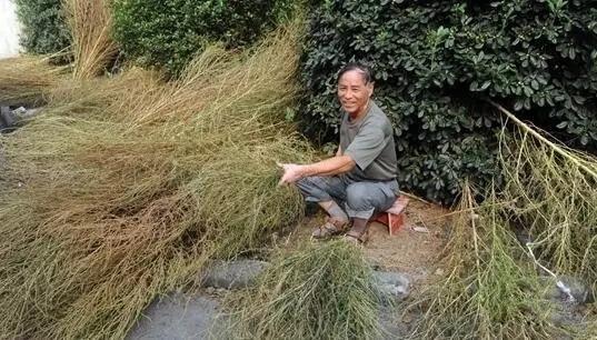 """国人把它当""""草"""",外国人却把它当成""""宝"""" - 周公乐 - xinhua8848 的博客"""