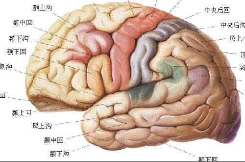 人类的大脑潜能更是巨大