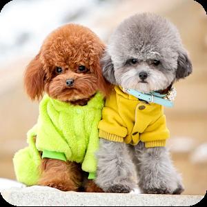 最可爱的狗狗排名