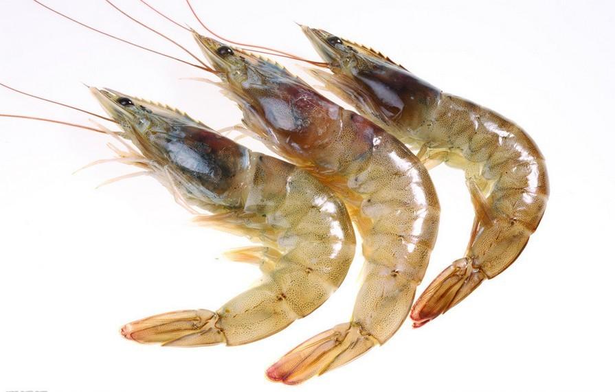 虾-甲壳类节肢动物