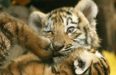 可爱的动物小宝贝