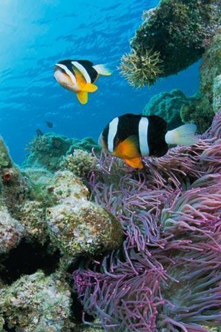 应用截图;; 海底动物;