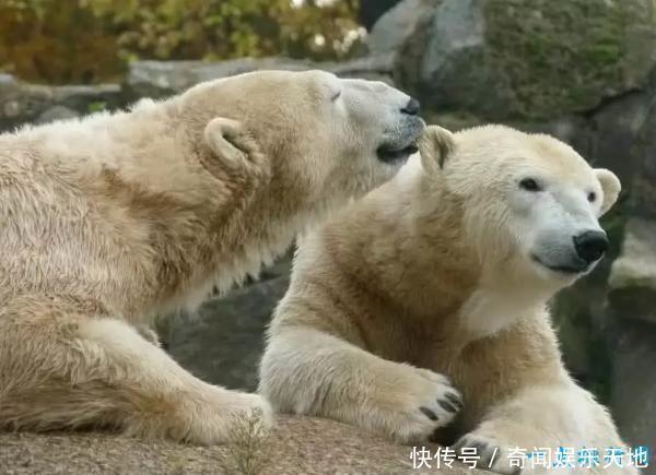 世界上十大濒临灭绝的动物,中国竟然占了五种