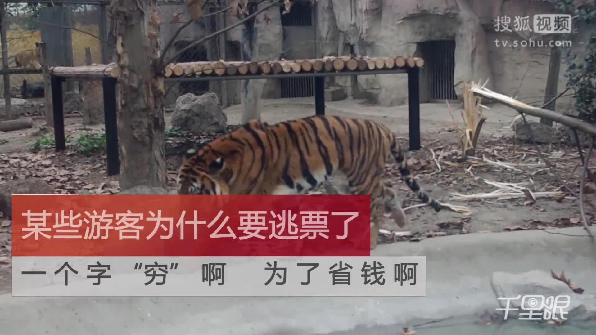 【成都】宁波雅戈尔动物园老虎吃人后续思考,如何根治逃票?