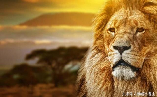 世界上最危险的五大动物,小时候却是当之无愧的萌主