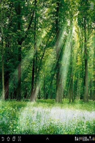 壁纸 风景 森林 桌面 320_480 竖版 竖屏 手机