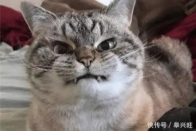 猫咪为啥有时咬主人凶主人?主要有这些原因