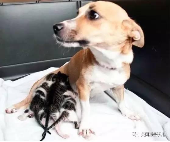 【转】北京时间      这只汪因为自己奶了个喵,竟然救了自己一命 - 妙康居士 - 妙康居士~晴樵雪读的博客