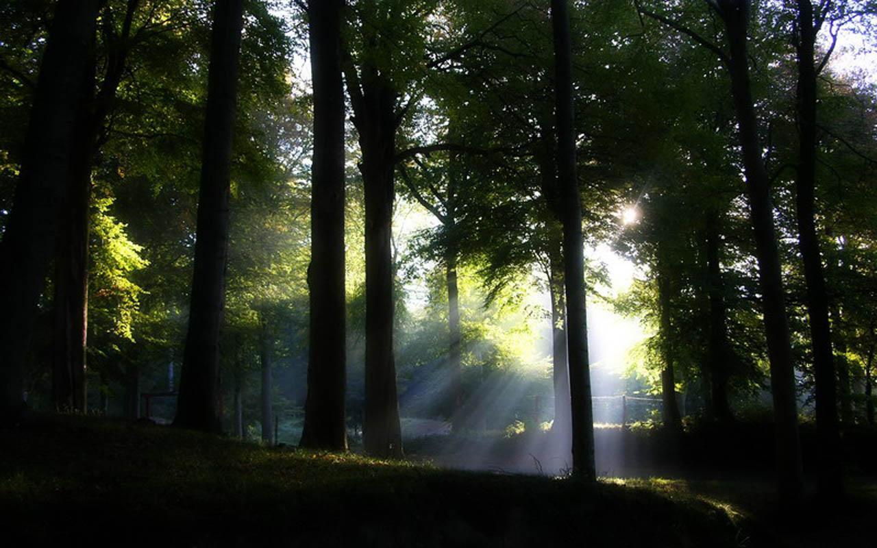 美丽的大自然,绿色的森林图片.保护环境,爱护花草树木.