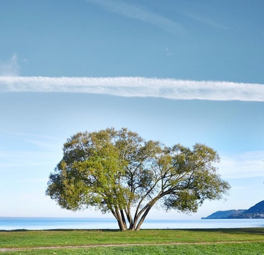一棵树的囹�a_来生愿站成一棵树