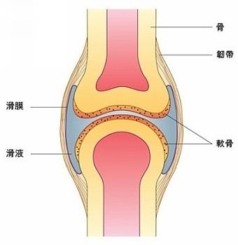 关节的辅助结构