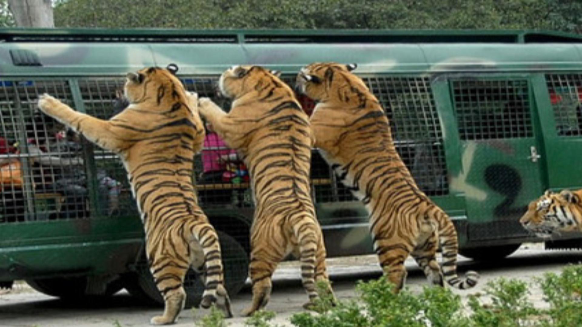 八达岭野生动物园营业