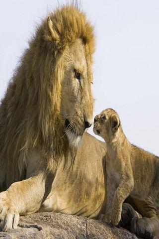 非洲野生动物图片