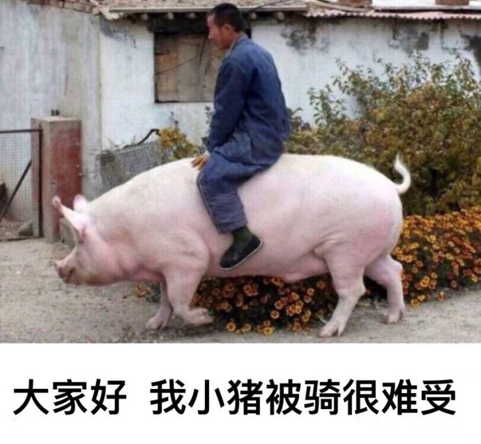 我小猪被骑很难受搞笑表...