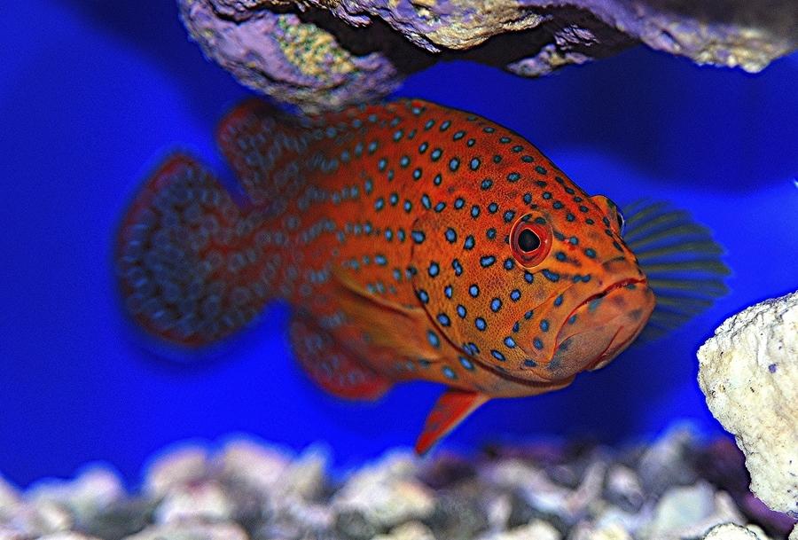 壁纸 动物 海底 海底世界 海洋馆 水族馆 鱼 鱼类 900_609
