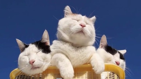 壁纸 动物 猫 猫咪 小猫 桌面 480_270