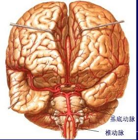 中动脉手绘图片