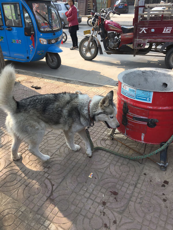 东风本田思域换个油泵多少钱啊,我们这修车直接问我要