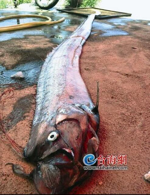 【转】北京时间     村民被吓坏!这里两次出现3.5米长怪鱼 - 妙康居士 - 妙康居士~晴樵雪读的博客