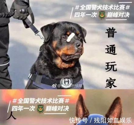 表情贴创可贴走红1,网友搞笑镯子图金都出了,这是:男子警犬图片