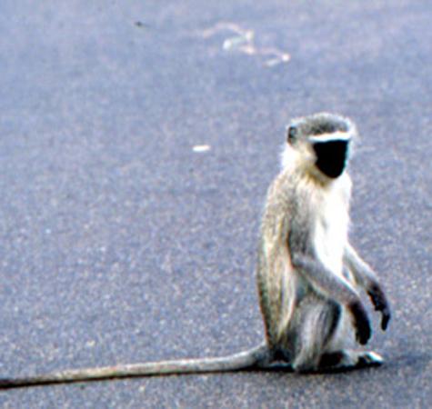 类重点保护野生动物