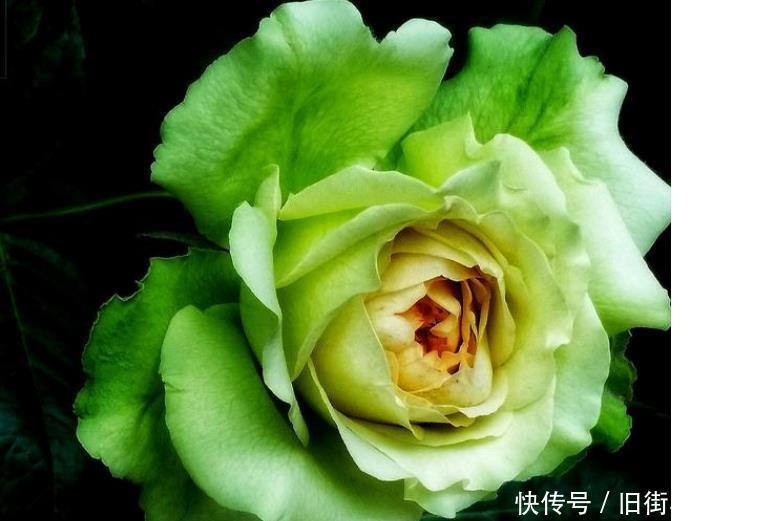 心理学你第一眼喜欢哪朵花,测出你会不会轻易上当受骗