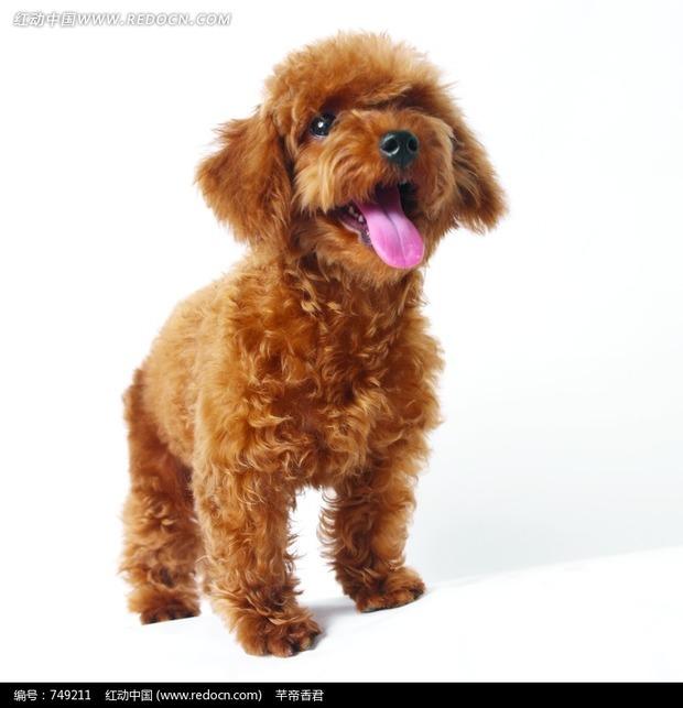 狗狗热的时候用什么散热